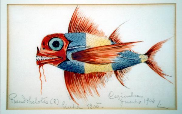 Peixe capturado em Sesimbra